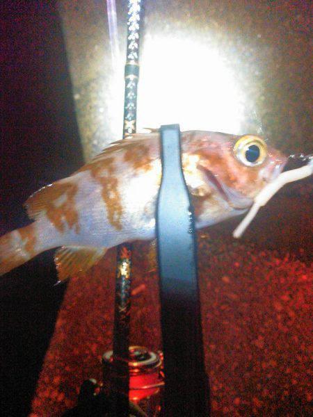 ガーグリッブ | 淡路島 | 釣果情報 堤防 ジギング 船釣 管理釣り場 釣り情報 | カンパリ全国版